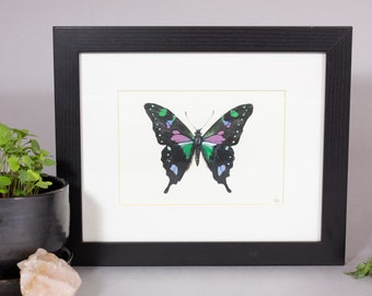 Indonesian Swallowtail Painting, Mounted Butterfly Painting, Framed Indonesian Swallowtail Painting, Framed Specimen