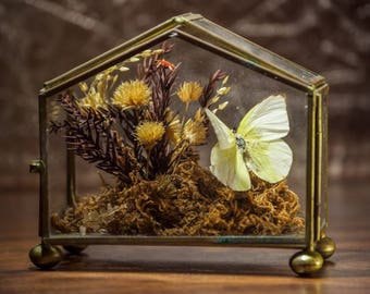 Vintage Dried Flower Terrarium with Yellow Butterfly