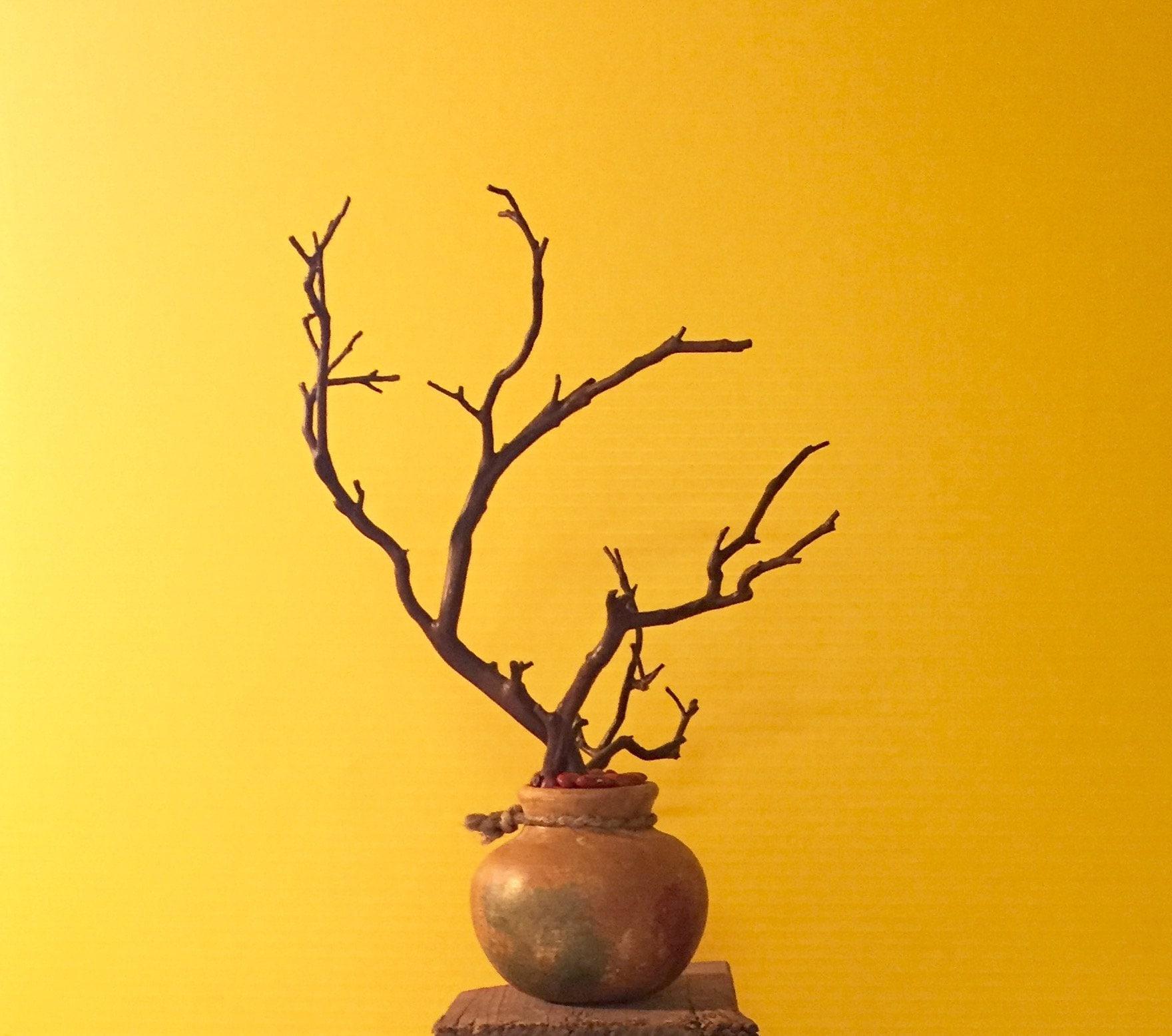 Small Manzanita in Southwestern Clay pot Housewarming gift | Etsy