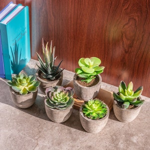 Variety Set Of Fake Succulent Plants Faux Succulents In Pot Etsy