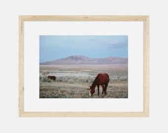 Photographic Print | Wild Horses
