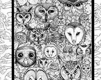 Owl Parliament Owl Art