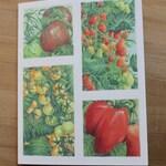 Tomato Medley Notecards