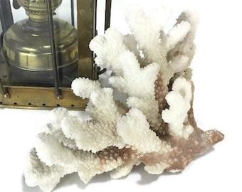 Vintage Natural Coral Specimen