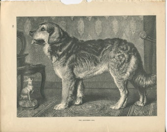 Vero Shaw - Antique Dog Print - Original lithograph  - 1881 Book Of The Dog - Leonberg Dog