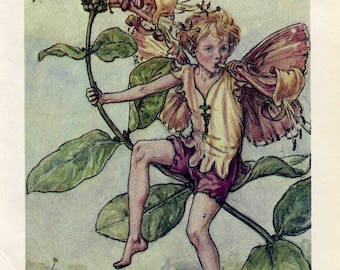 SALE Antique Color Book platePlate Print Vintage Bookplate Book of Flower Fairies The Honeysuckle Fairy Cicely Barker 1960's