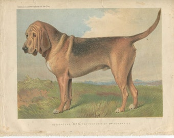 Vero Shaw - Antique Dog Print -Bloodhound - Original Chromolithograph  - 1881 Book Of The Dog