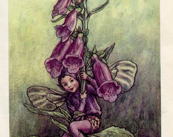 SALE Antique Color Book platePlate Print Vintage Bookplate Book of Flower Fairies The Foxglove Fairy Cicely Barker 1960's
