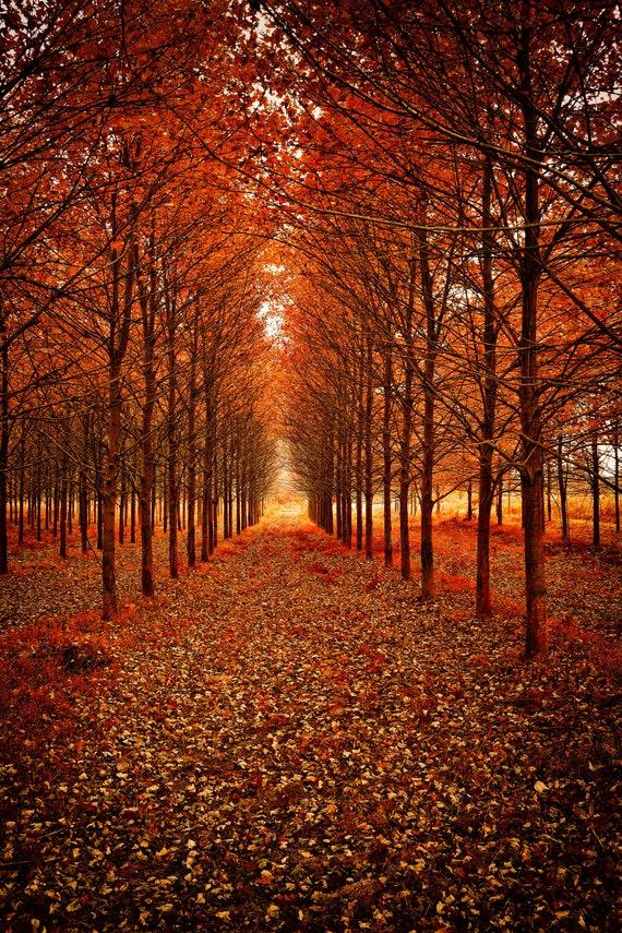 Autumn Fireautumn Scenefall Sceneautumn Art Fall Etsy