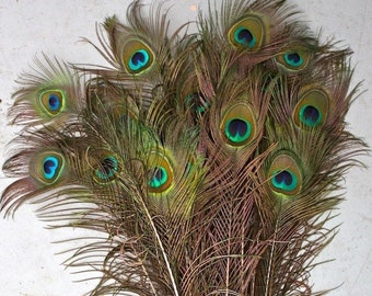 Peacock feathers   Etsy