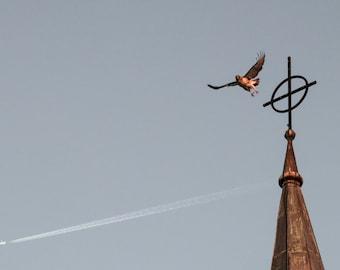 Hawk Photograph Universalist Church of West Hartford CT Fern Street