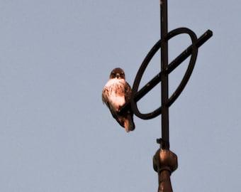 Modern Bird Photography Universalist Church of West Hartford CT Fern Street