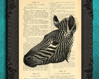 zebra print zebra art nursery animal wall art zebra print