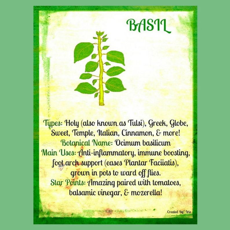 Basil (8x10 JPG), 1 Quinoa Herb Salsa Recipe (PDF), 1 Holy Basil Insight  (PDF)- Instant Download, Digital, Printable, Italian, Art, Gift
