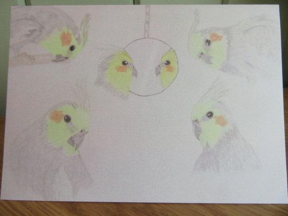 Original Pencil Artwork Cockatiel Blank Inside Card Cockatiel Greeting Card