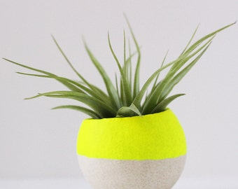 Small Neon Yellow Air Plant Pod w/ Air Plant