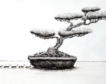 Bonsai Ari