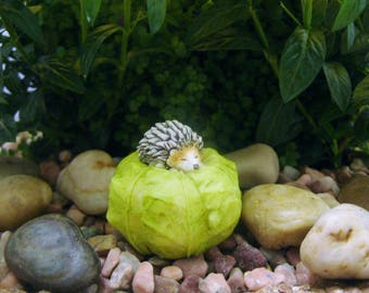 Hedgehog - Cabbage - Fairy Garden - Terrarium - Miniature Gardening