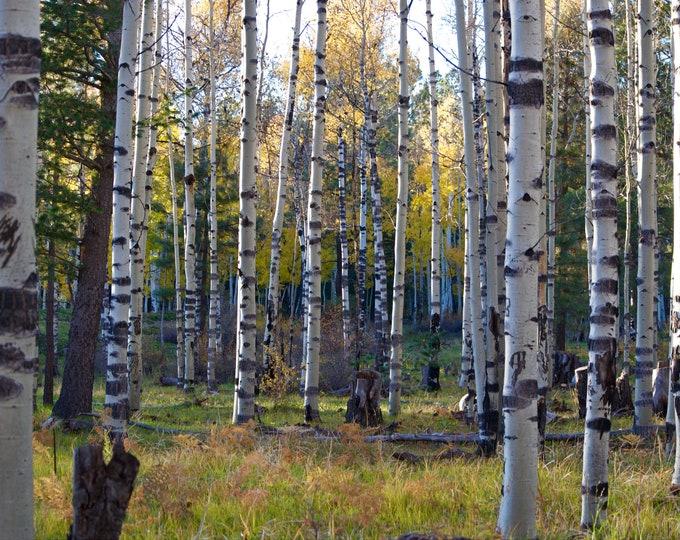 Flagstaff - Aspen, Digital Download, Digital Photography, Frame TV Art, Zoom Background