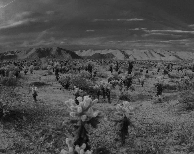 Joshua Tree National Park - B&W Cholla, Digital Download, Digital Photography, Frame TV Art, Zoom Background