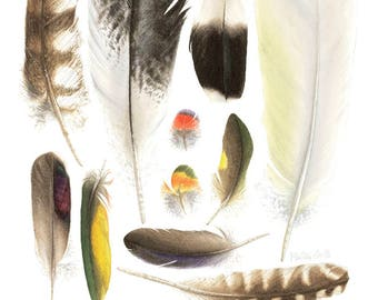 Feathers of Australian Birds Giclee' Print