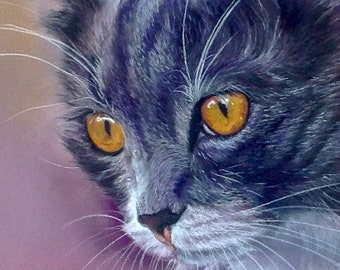 The cat with amber eyes