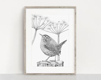 Wren  - Giclee Art Print from an original ink drawing, Wren wall art, Garden Bird Art Print -FREE DELIVERY-