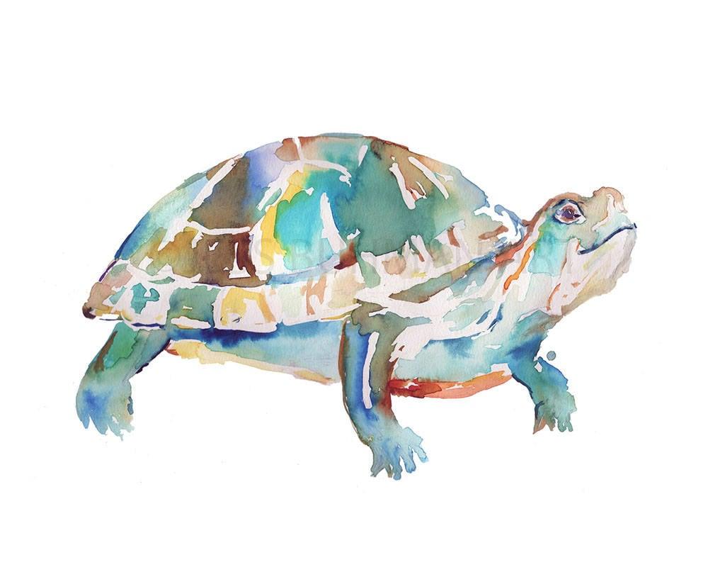 Imprime de la tortuga tortuga acuarela impresión 8 x 10 | Etsy