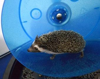 The Carolina Storm Bucket Wheel with litter pan.