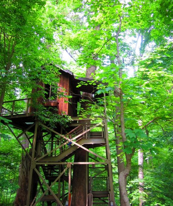 8x10 Birdhouse Treehouse Photo Treehouse Photography Etsy