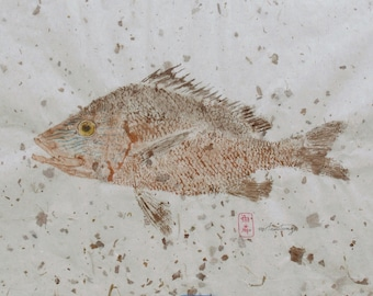 White Grunt Gyotaku Fish Print Original on rice paper 18 x 12