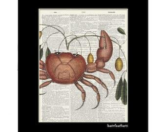 Vintage Crab Illustration - Dictionary Art Print - Book Page Art Print - Home Decor No. P434