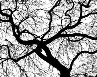 Tree Silhouette, Japanese Maple, Tree Photography, winter tree, Bare tree Photograph print
