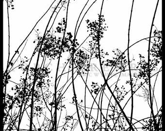 Tree Silhouette, Tree Photography, winter tree, Bare tree Photograph print