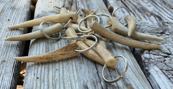 SC Whitetail Deer Antler Tip Keychain       Organic  Good Luck Talisman