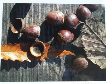 Abstract Acorns with Leaves (The Flora Collection) by Susan A Ray of OneHealingStone Studio