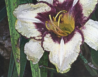 Purple Throated Iris  (The Flora Collection) by Susan A Ray of OneHealingStone Studio