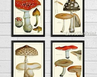 Mushroom Art Print Vintage Forest Mushroom Print 244 Botanical Kitchen Decor