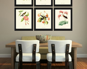 Hummingbird Print SET of 6 Art Beautiful Antique Humminbirds Birds Tropical Pink Flowers Botanical Garden Illustration Decor to Frame