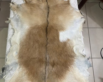 Fawn and cream colour goat skin