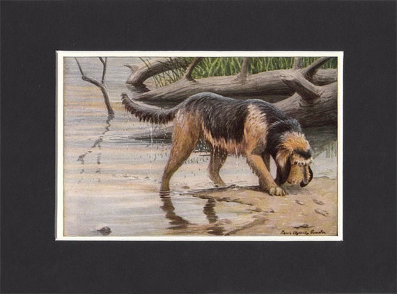 OTTERHOUND DOGS AT WORK LOVELY DOG PRINT MOUNTED READY TO FRAME