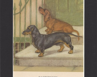 Dachshunds Print Vintage Dog Print George Vernon Stokes Print 1947 Drawing Mounted with Black Mat Doxie Print Teckel Print Weiner Dog