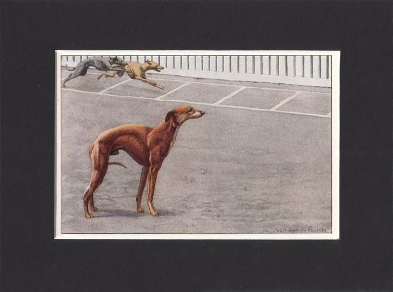 Whippet 1919  Vintage Dog Print by Louis Agassiz Fuertes Small image 0