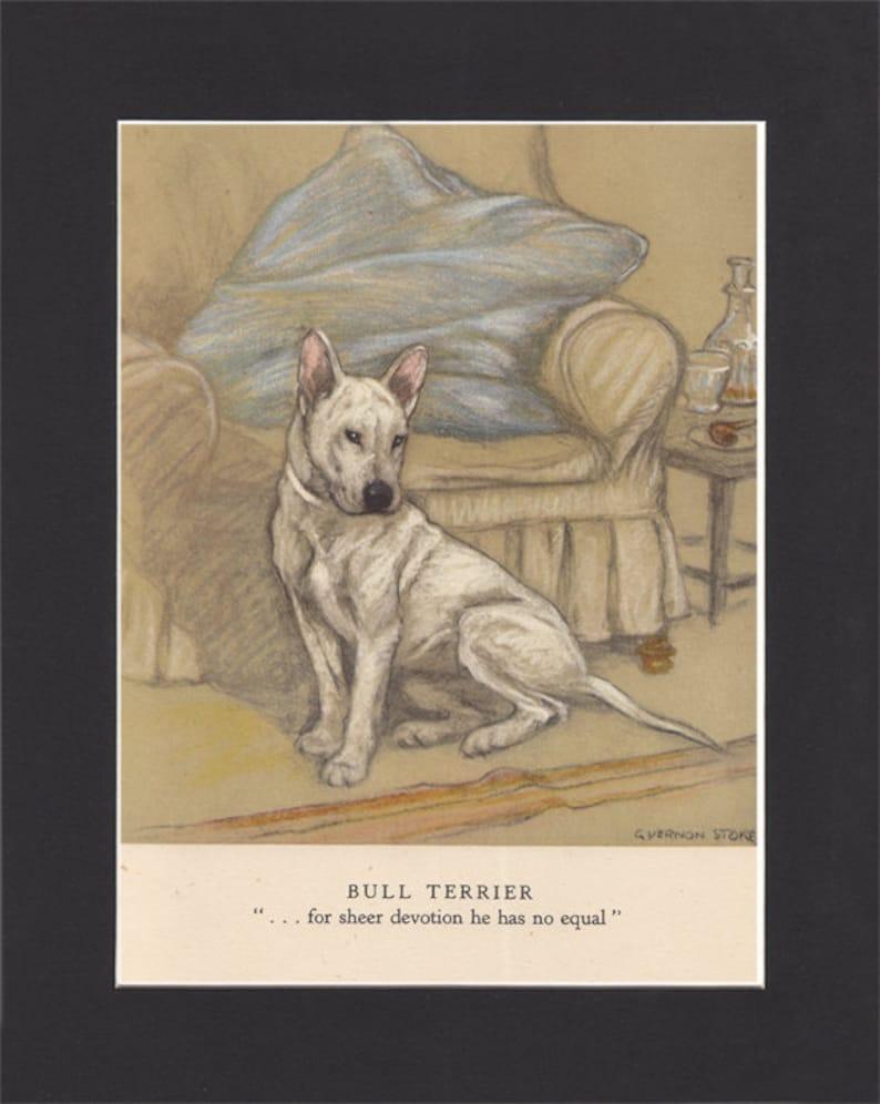 Bull Terrier Vintage Dog Print George Vernon Stokes 1947 image 0