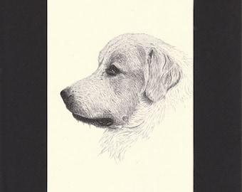 Pyrenean Mountain Dog Vintage Print C.Francis Wardle Original 1935 Drawing Print Mounted with Mat Pyrenean Print Pyrenean Dog Print