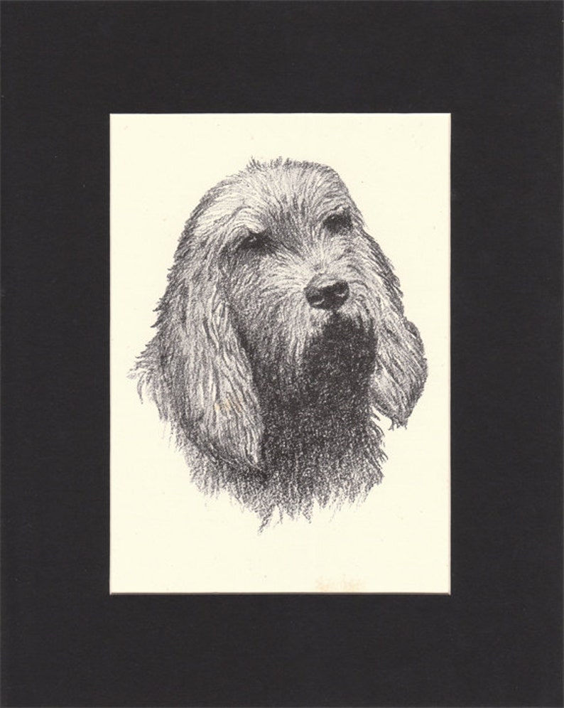 Otterhound Print by C.Francis Wardle  1935 Vintage Print of image 0