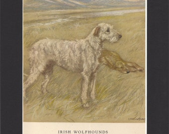 Irish Wolfhound Vintage Dog Print George Vernon Stokes 1947 Print Mounted with Black Mat Irish Wolfhound Print