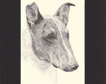 Smooth Collie Vintage Dog Print C.Francis Wardle Original 1935 Drawing Mounted with Mat Collie Dog Smooth Collie Print Sheepdog Print