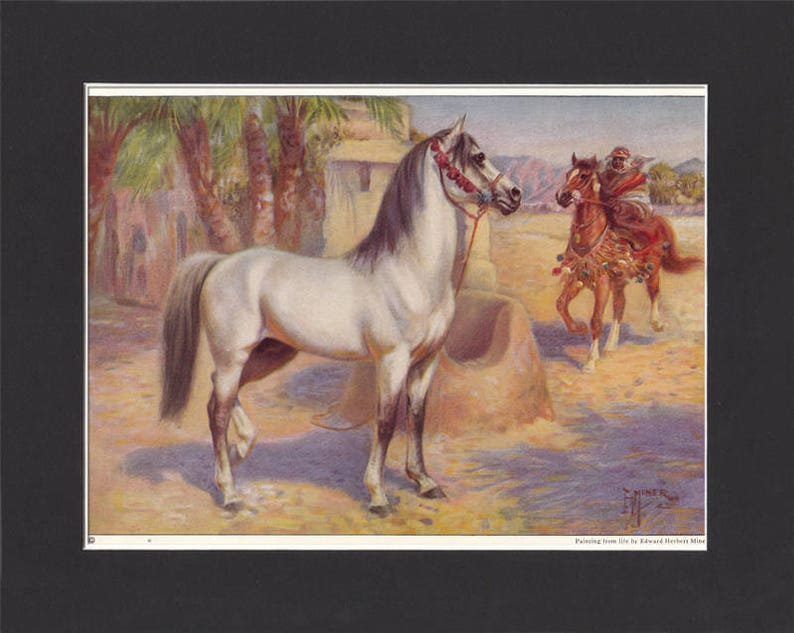 Arab Horse Print 1923 By Edward Miner Print of Signed Painting image 0