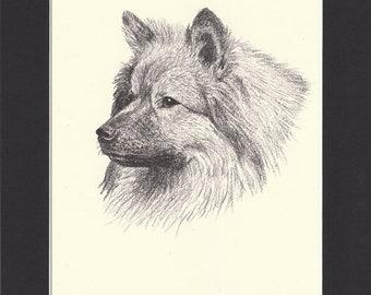 Keeshond Vintage Dog Print by C.Francis Wardle - Original 1935 Print of Drawing with Matt - Keeshond Print